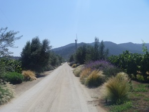 The entrance roads to some wineries are very beautiful.