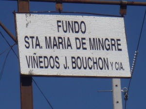 When Jonathan started laughing, I knew this was the vineyard sign.