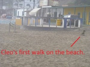 Cleo on beach