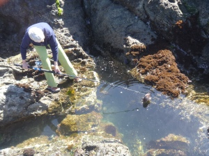 6.23 fishing for abalone shells-004