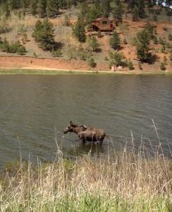 Moose 6.4.15
