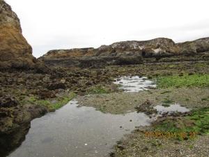 Glass Beach super low tide 7.5.15-008sm