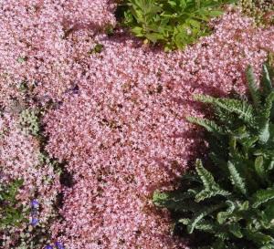 Mendo Bot Garden 7.1.15-008sm