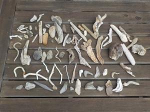 8.21.15 driftwood