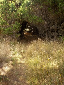 8.28.15 spring ranch-041sm