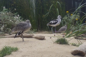 Monterey aq birds sm
