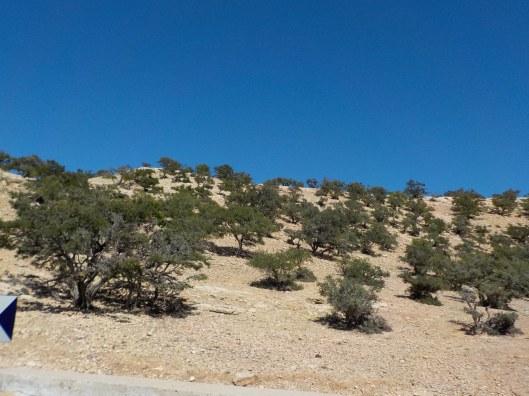 3.20.16 Agadir to Essaouira-013