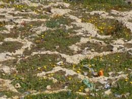 Flowers among the rock