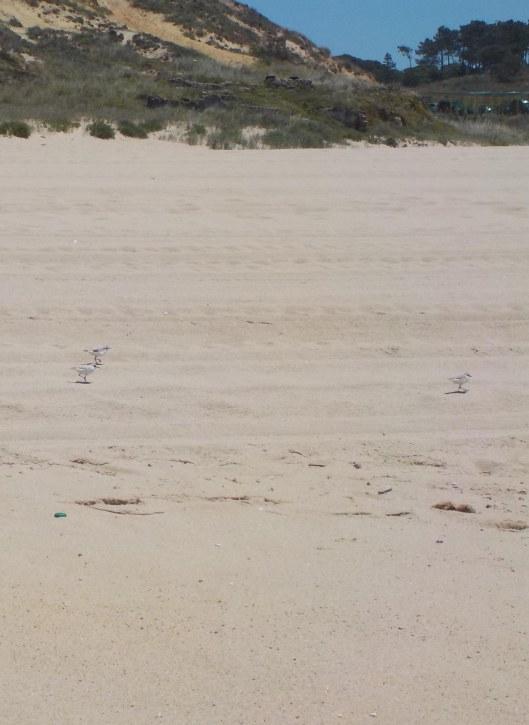 5.19.16 Praia de Meco-002sm