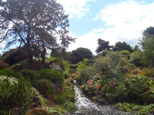 7.13.16 Edinburgh botanical garden-004