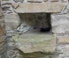 8.18.16 Carsluith Castle-003sm