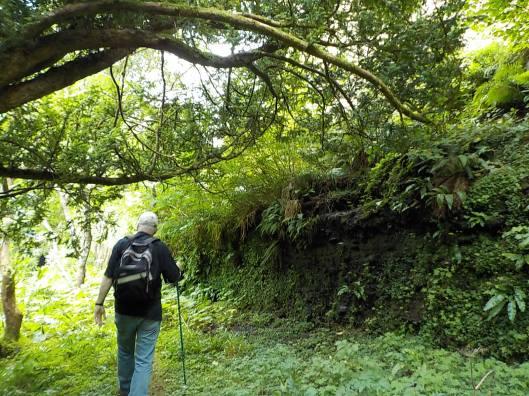 Into the wild garden