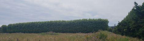 12.30.18 hedged field-001crsm