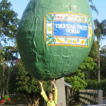 6.28.19 Tropical Fruit worldsm